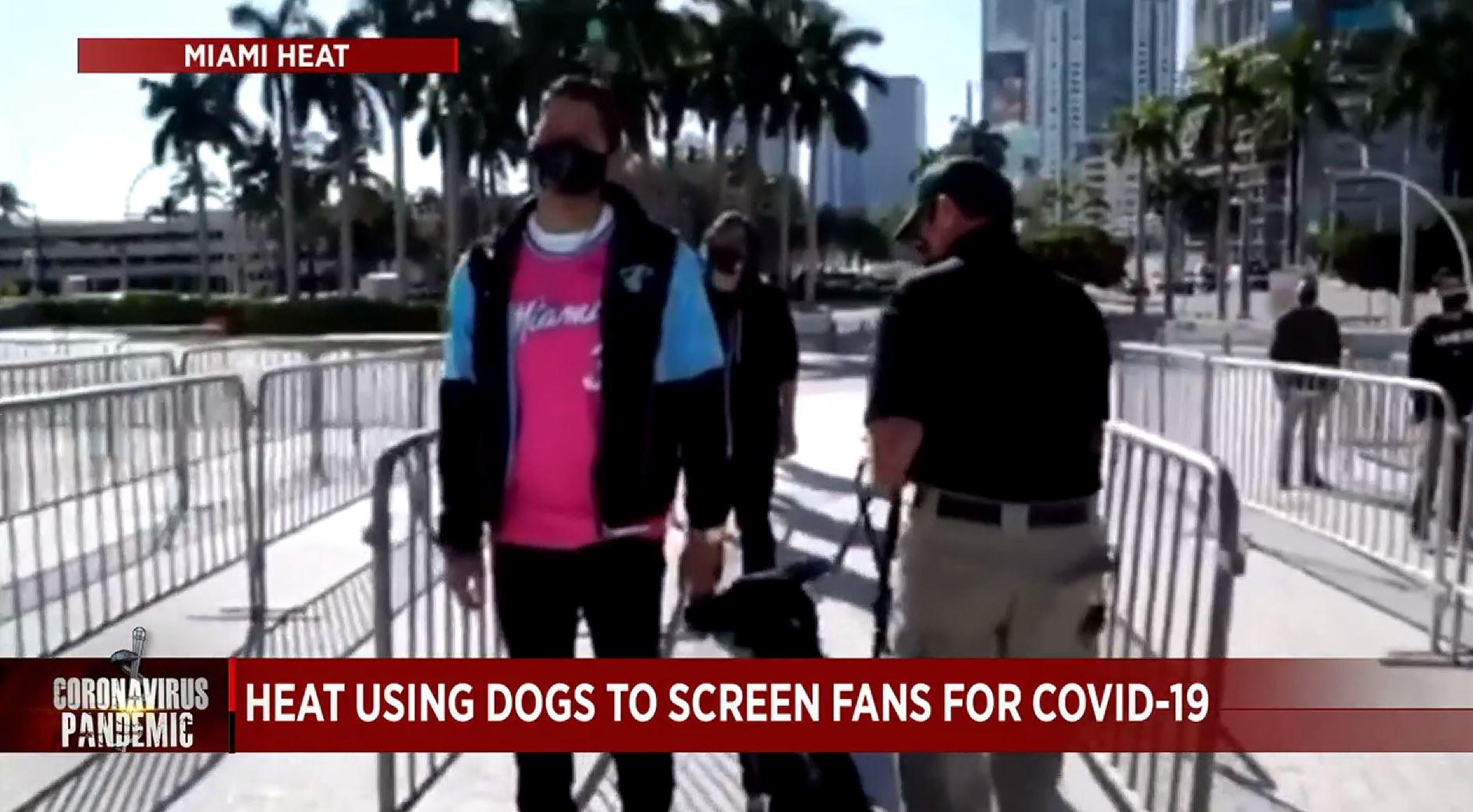 COVID-19 dogs